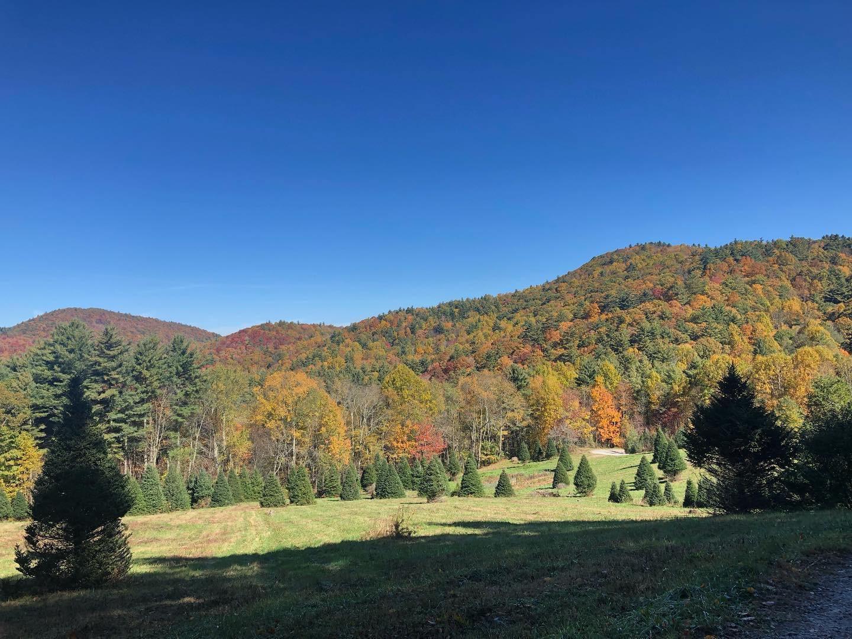 Moss Tree Farm Fall 2019