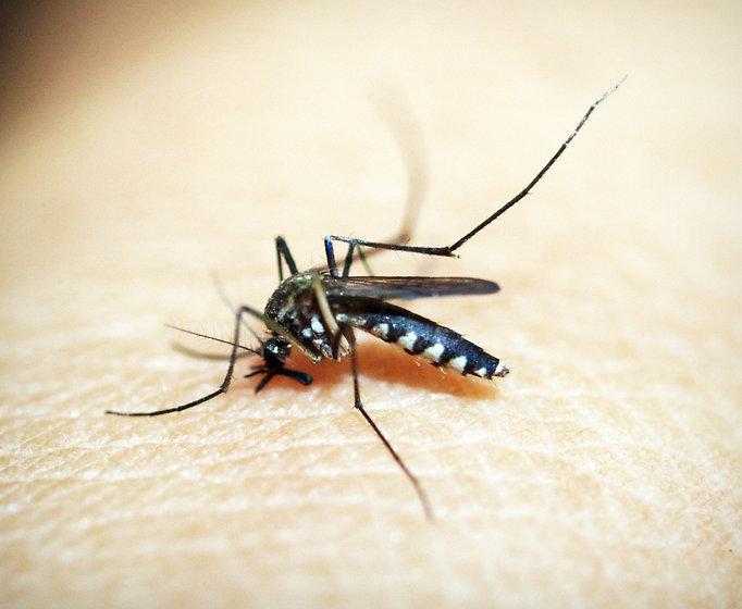 pest%20mosquito_edited.jpg