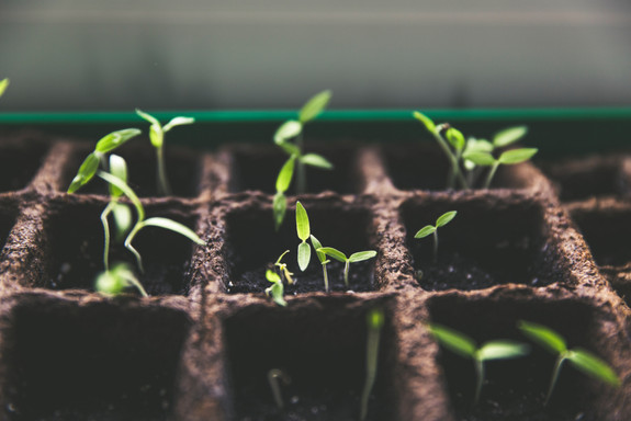 It all starts with a seed.