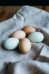 Fresh-laid Eggs