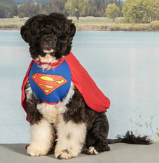 HarveySUPERDOG_edited_edited.jpg