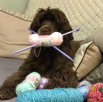 Knitting for puppies.