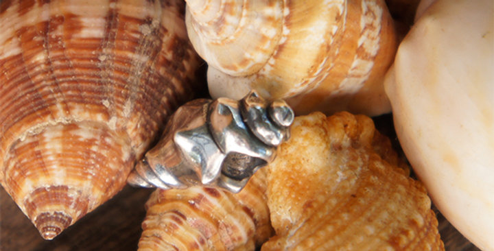Conch Shell 343