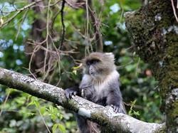 Ecovolontariat animaux Kenya