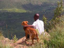 Pour les animaux du Kenya