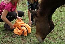 Développement personnel avec les chevaux