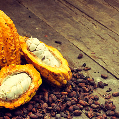 Upcycling and the Cacao Fruit