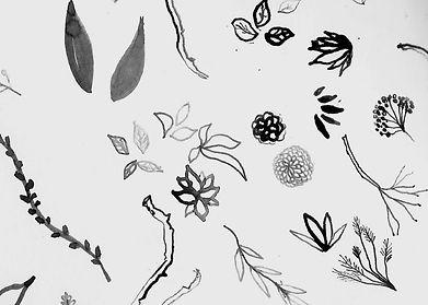 ink drawing (1).jpg
