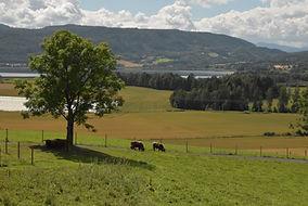 DSC_0846 Beitelandskap Rune Isachsen.jpg