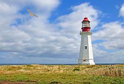 lighthouse with seagull.jpg