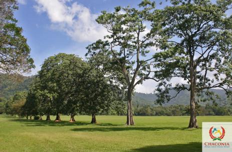 Queen's Park Savannah.jpg