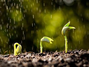 Career Development and Rain