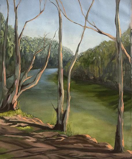 Deep Creek Billabong - Garigal Country