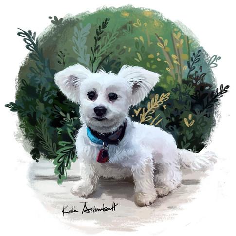 puppy portrait.jpg