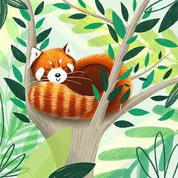 red panda illo.JPG