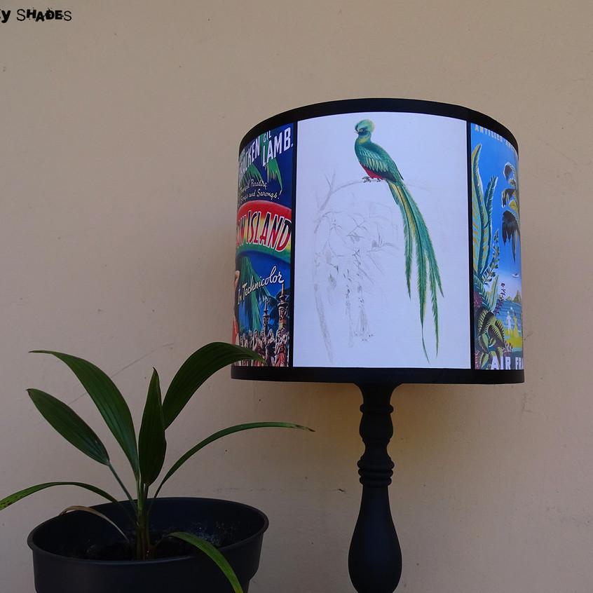 Rainbow Island bird of paradise