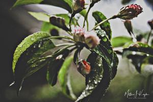 PicsArt_05-20-10.34.54.jpg