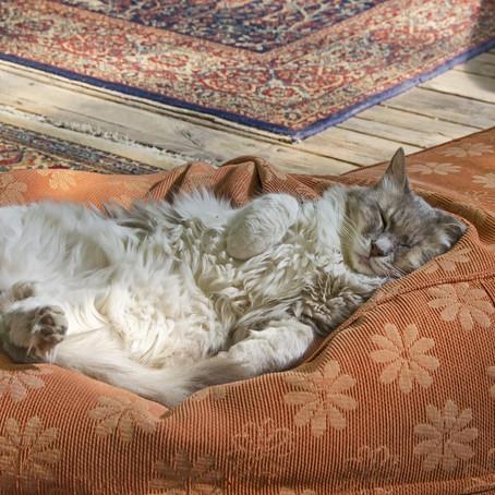 Sedentarismo Felino! Como mudar a rotina dos gatinhos?