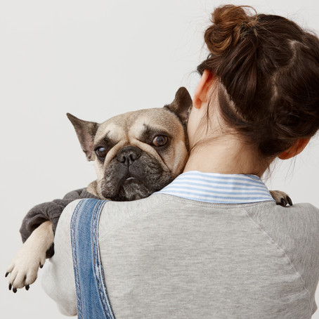 O que fazer quando meu pet fica ansioso?
