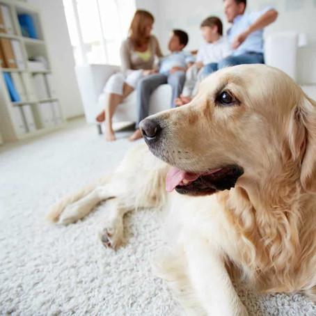 Seu cãozinho mora em apartamento?