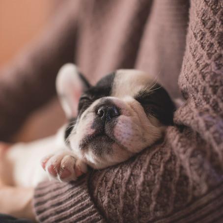 Afinal, os cachorros sonham?