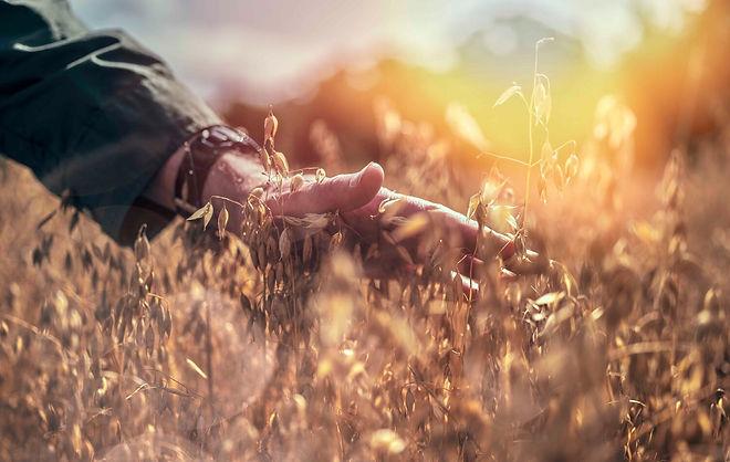 A hand feeling through a field.