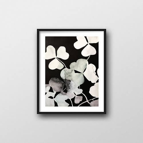 Oxalis on Black Art Print