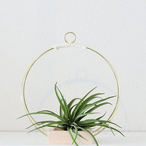 J. Rook Plant Shelf - Small
