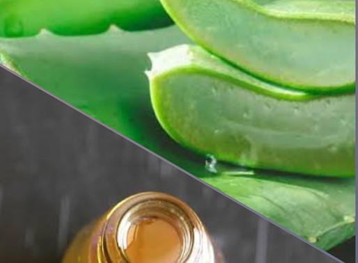 Homemade Aloe Vera Hair oil