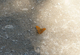 Schmetterlingjpg.jpg
