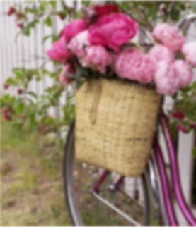 Bike Image.jpg