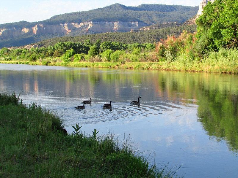 swans christ in desert river medium.JPG