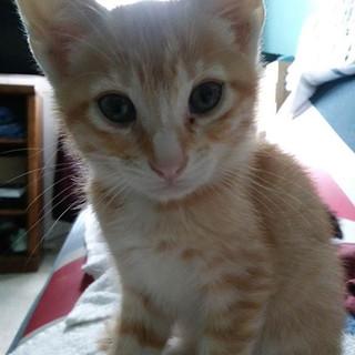 COVID Kitten Season