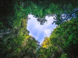 heart-shaped-photography-sky-rain-forest