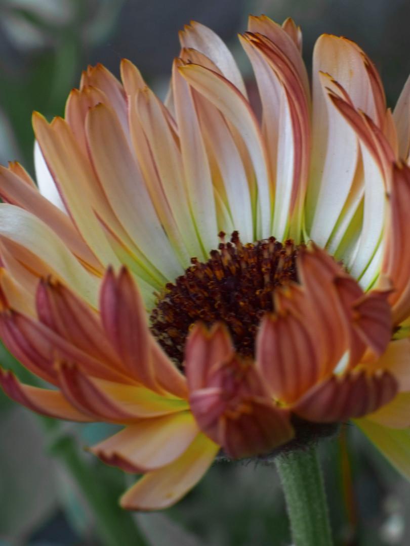 prettyflower5.jpg
