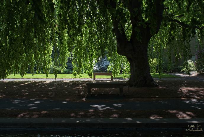 underashadytree.jpg