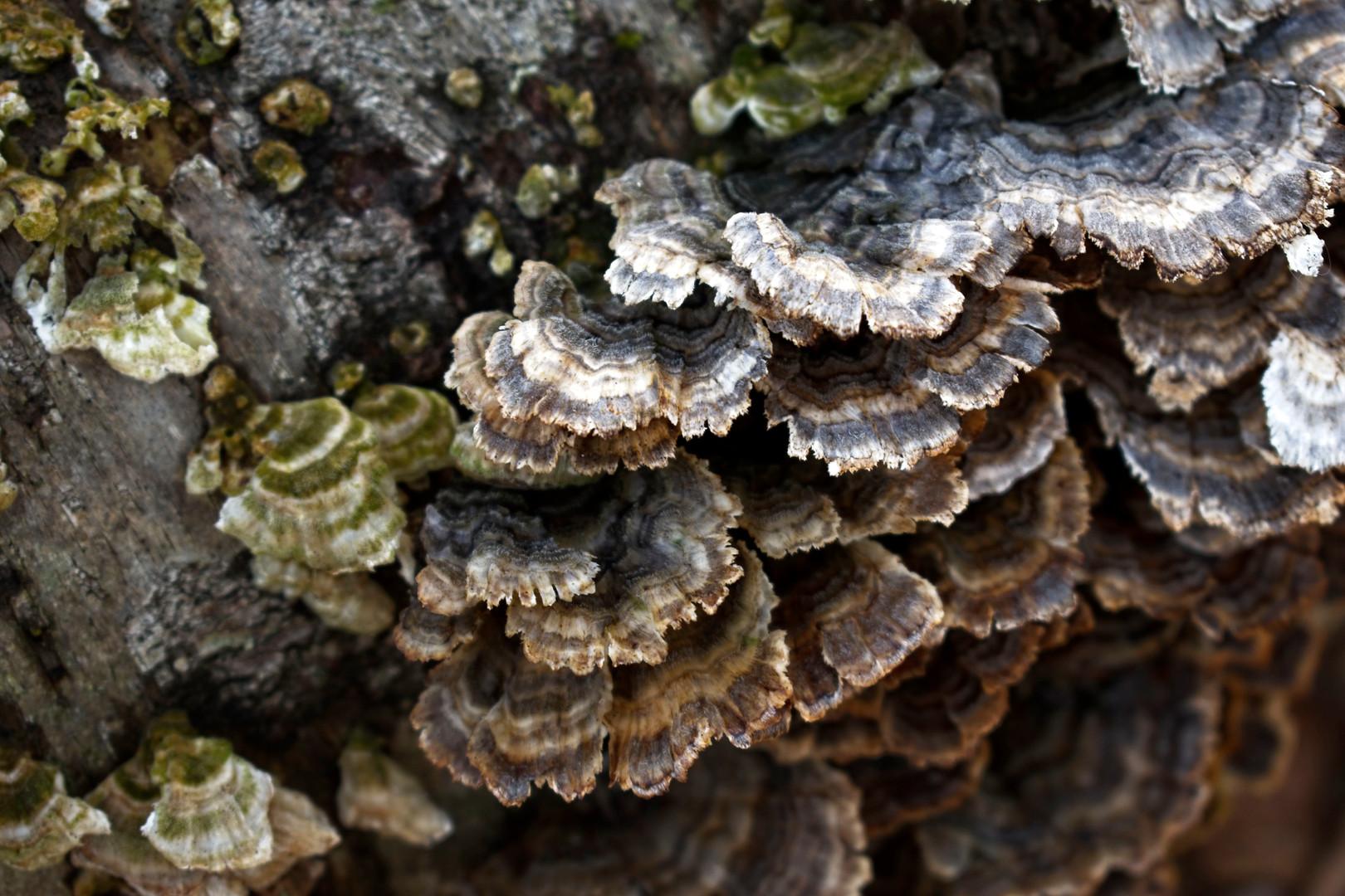 there's a fungus amongous.jpg