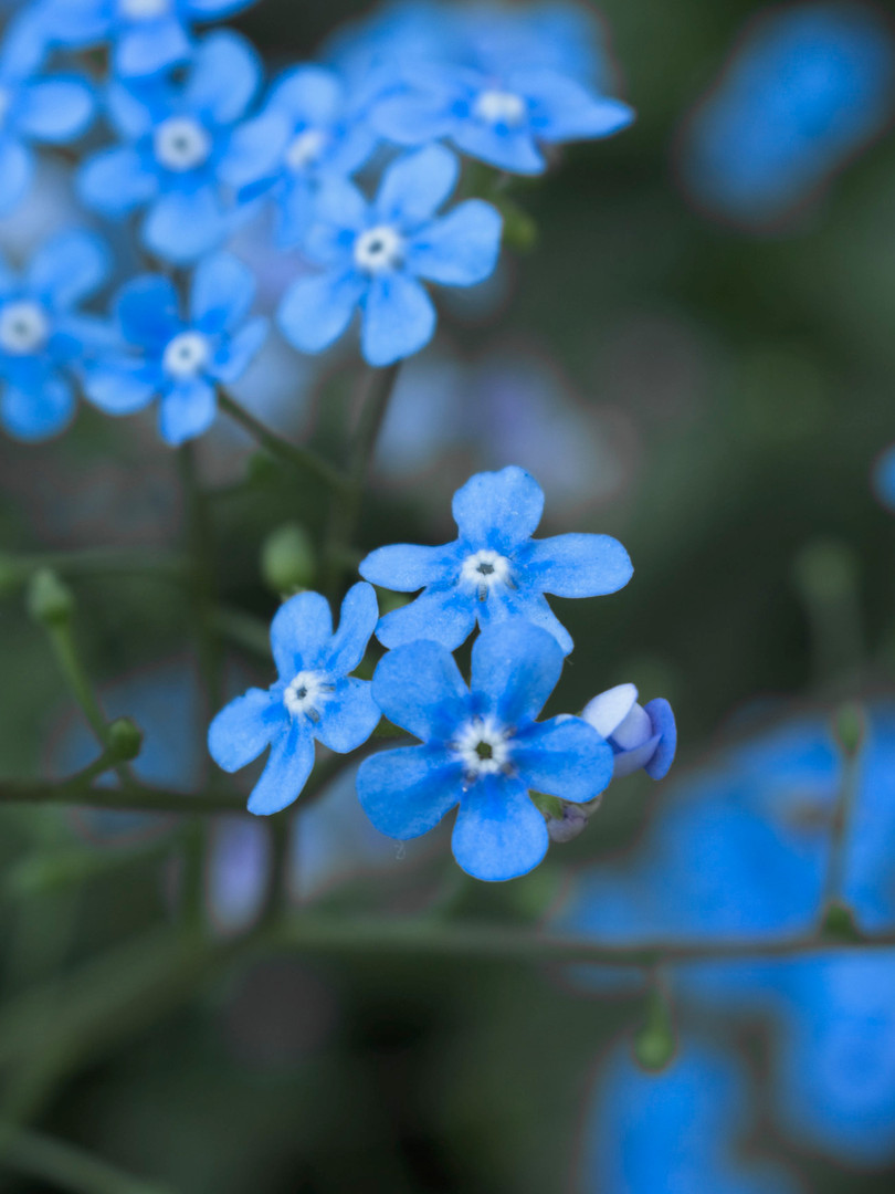 blueflower.jpg