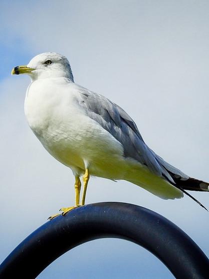 seagull2.jpg