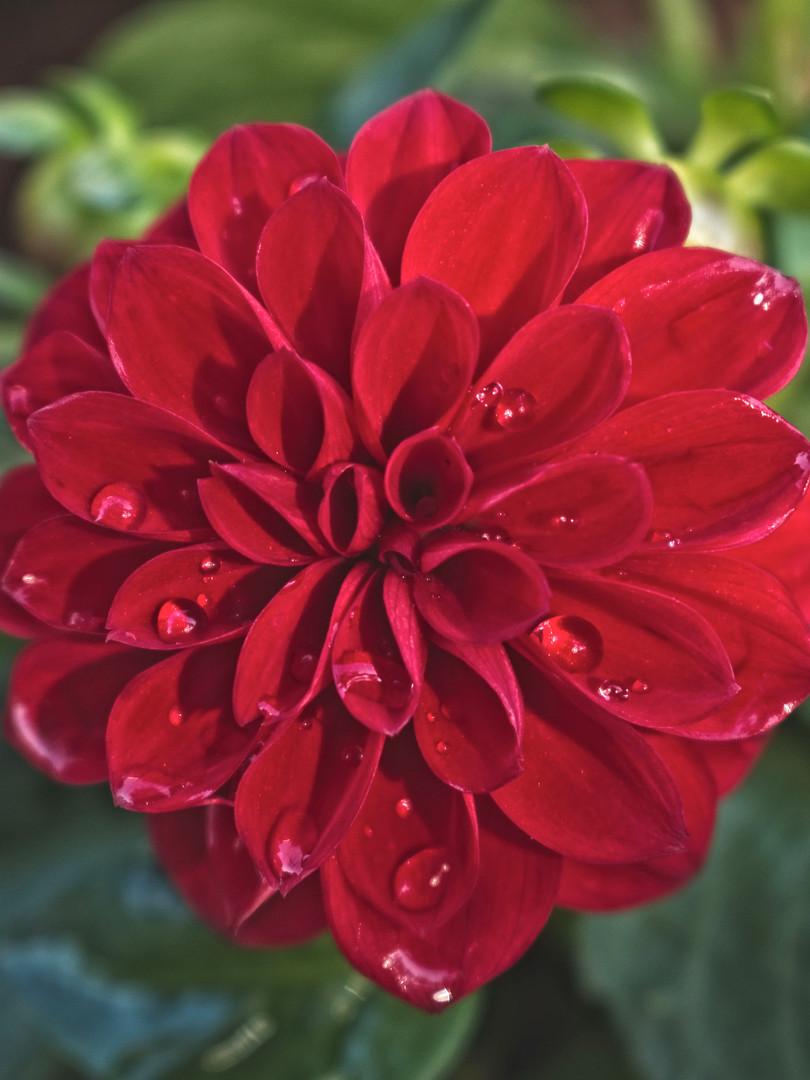 mothersday flowers3.jpg