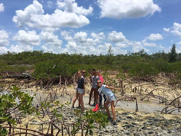 Mangroves_Ecosystems Camp.jpeg
