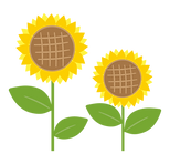 himawari_sunflower_11451.png