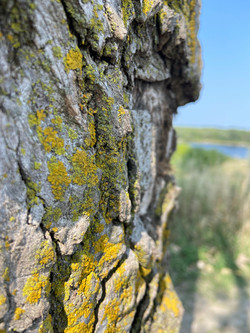 Jannisch_kyleigh_tree