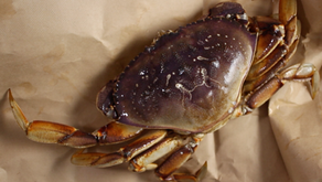 How I Break Apart a Fresh Crab with my Bare Hands