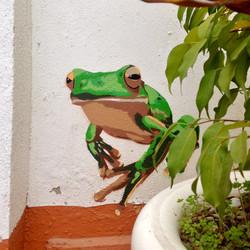 A frog, enjoying the sun