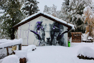 heidi im schnee.jpg