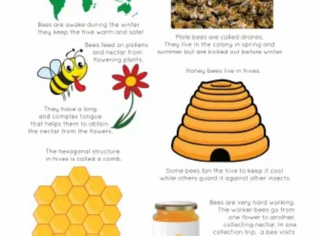 BEEFACTS