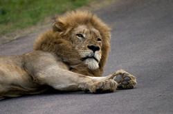 10 Day Kruger & Two Kingdoms