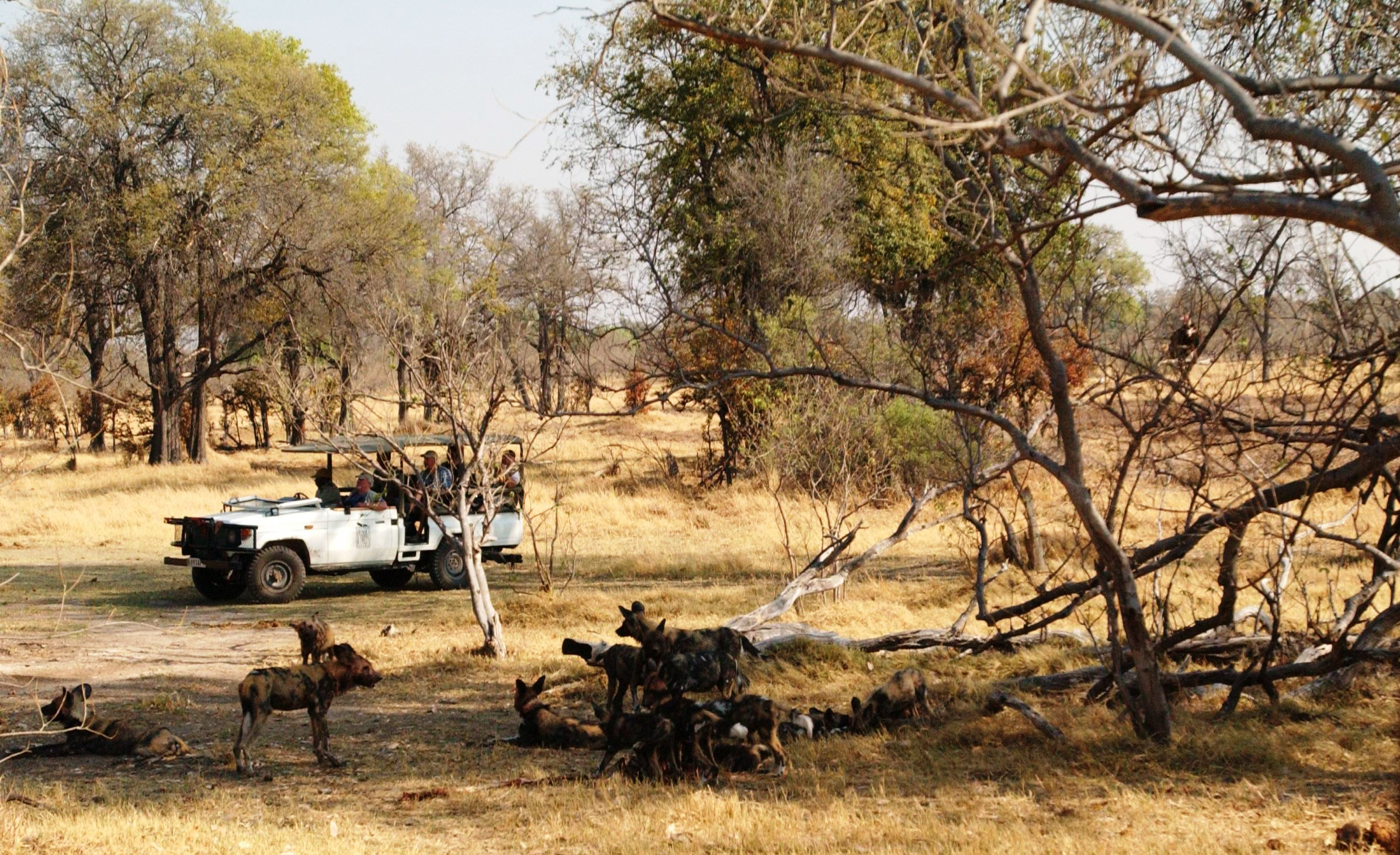 7 Day Botswana Wildlife Explorer