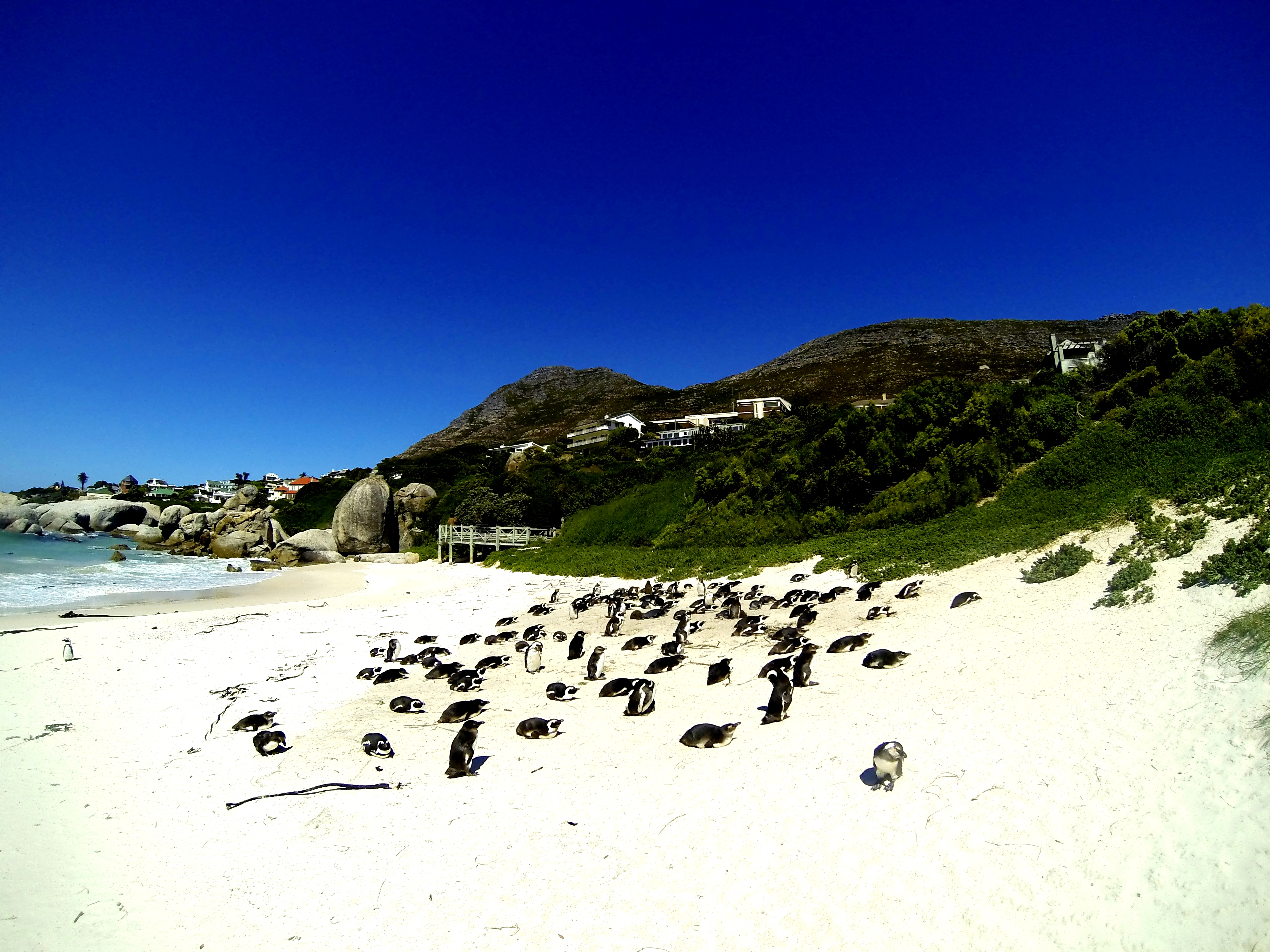 15 Day Scenic South Africa